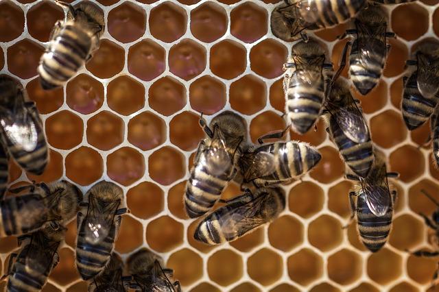 Panal abejas - Honeycomb